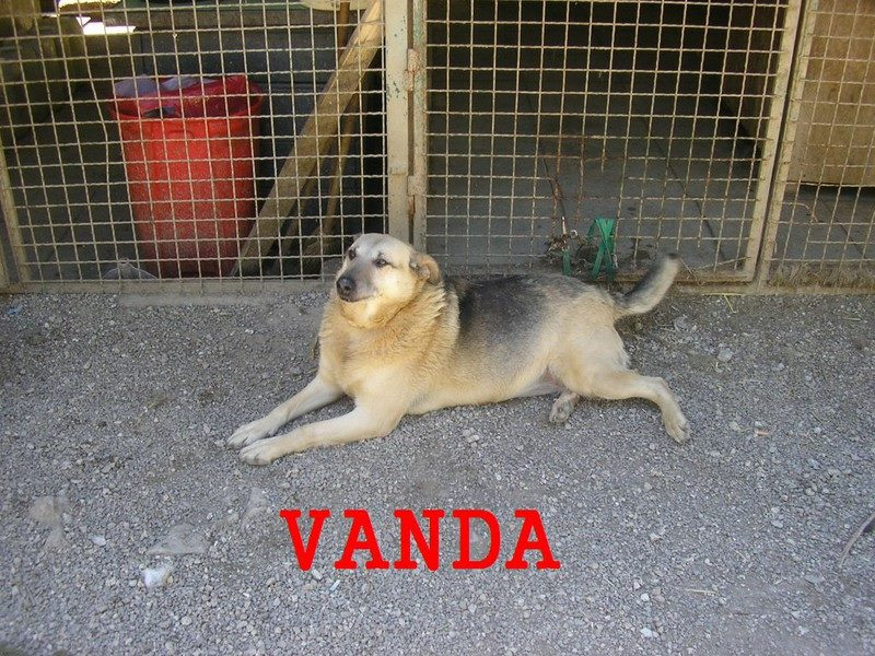 Vanda