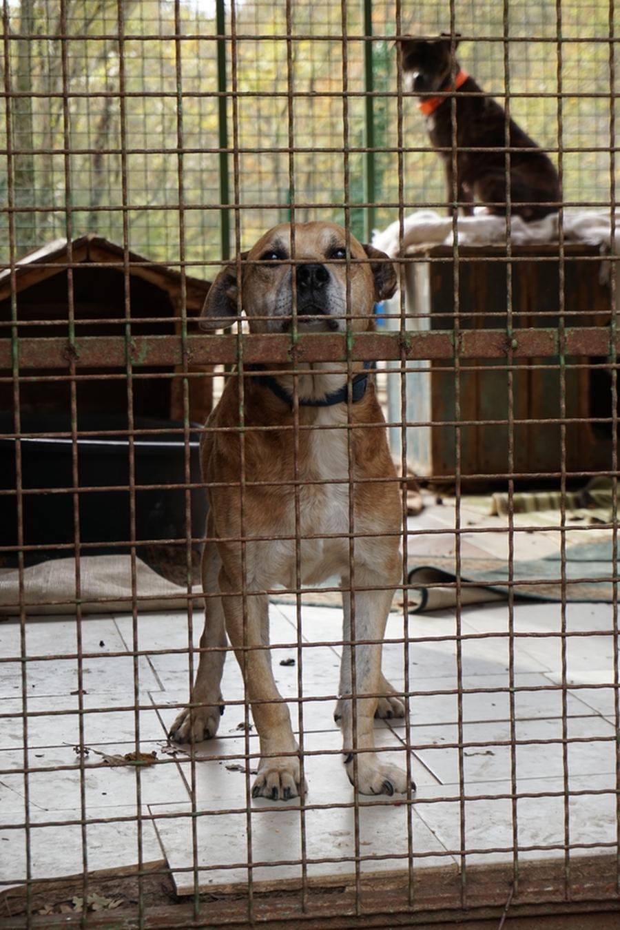 Dingo 5.jpg