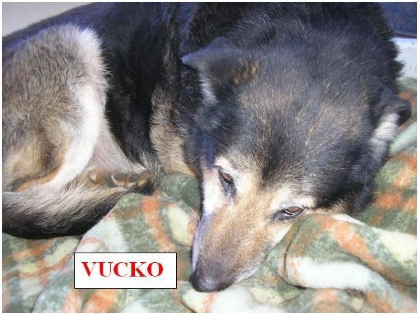 Vucko2.jpg