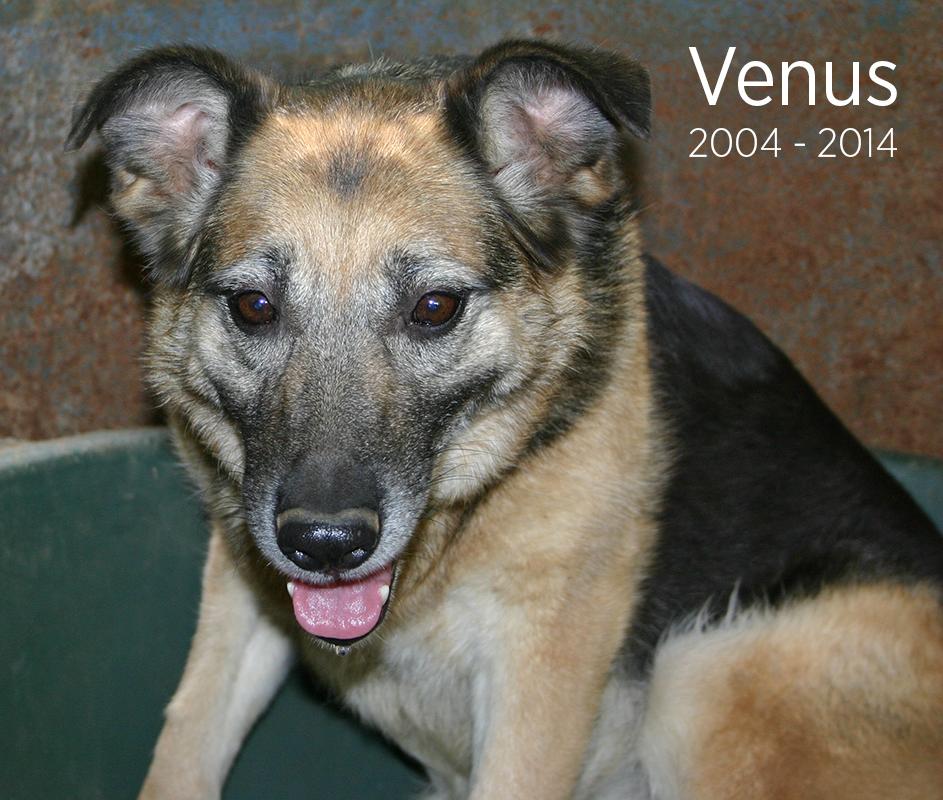 Venus-In-memoriam.jpg