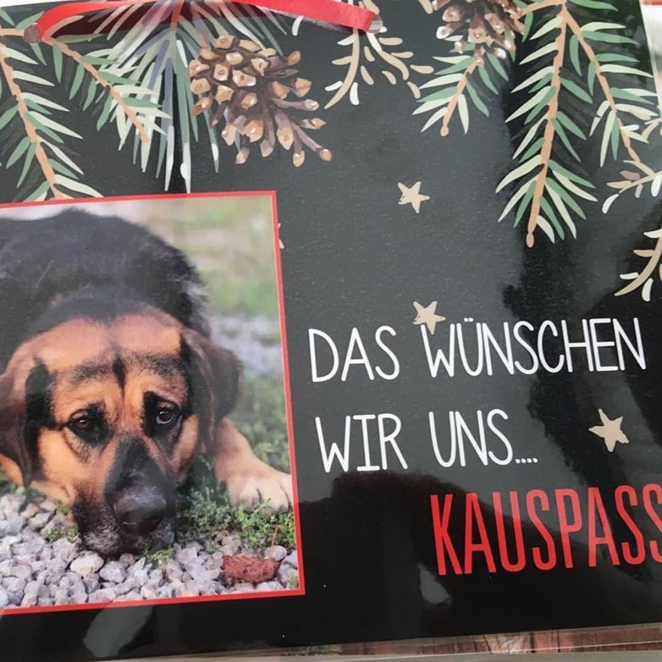 Wünschebaum Goslar 4.jpg