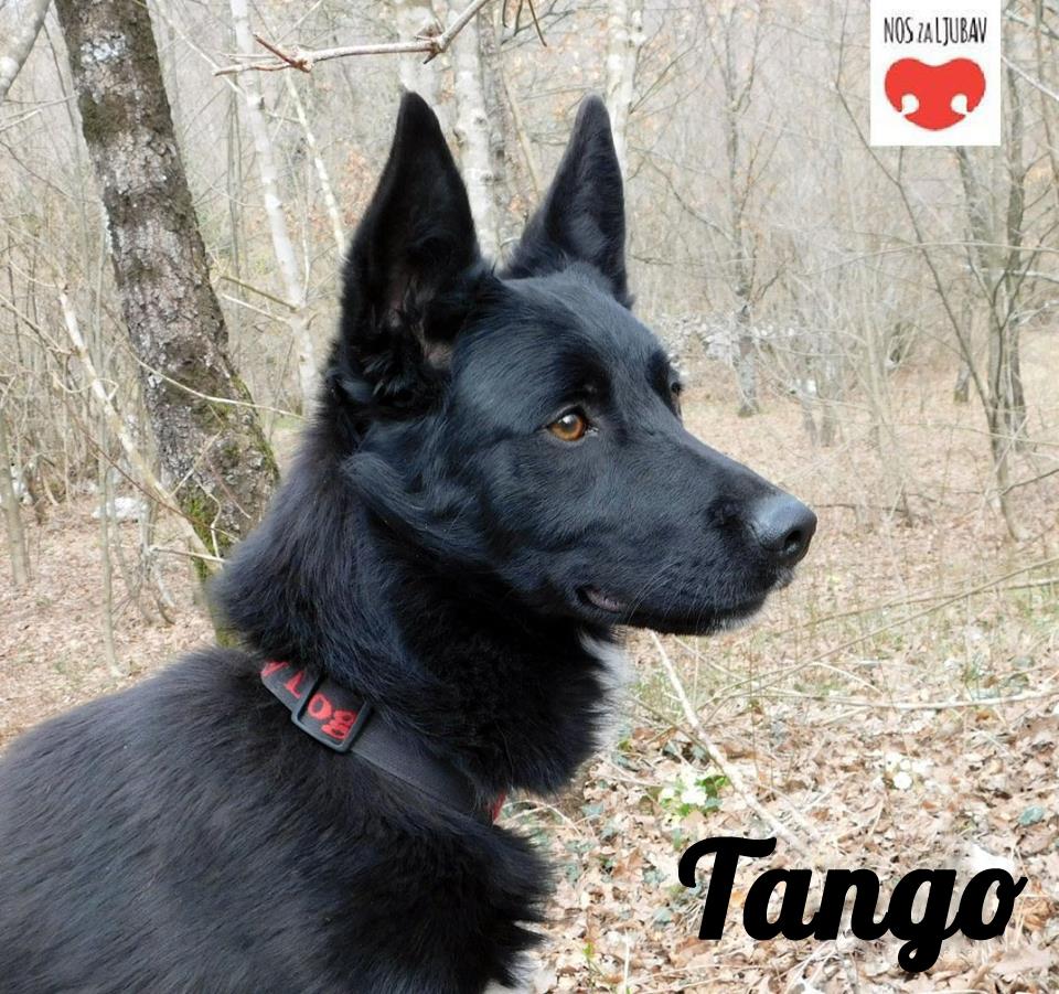 Tango (Händicap)
