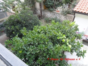 032ausblick_vom_balkon__orangenbaum.jpg
